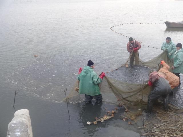 места для рыбалки на веселовском водохранилище