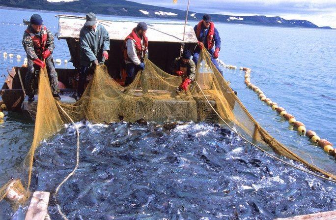 использование рыболовную сеть законодательство